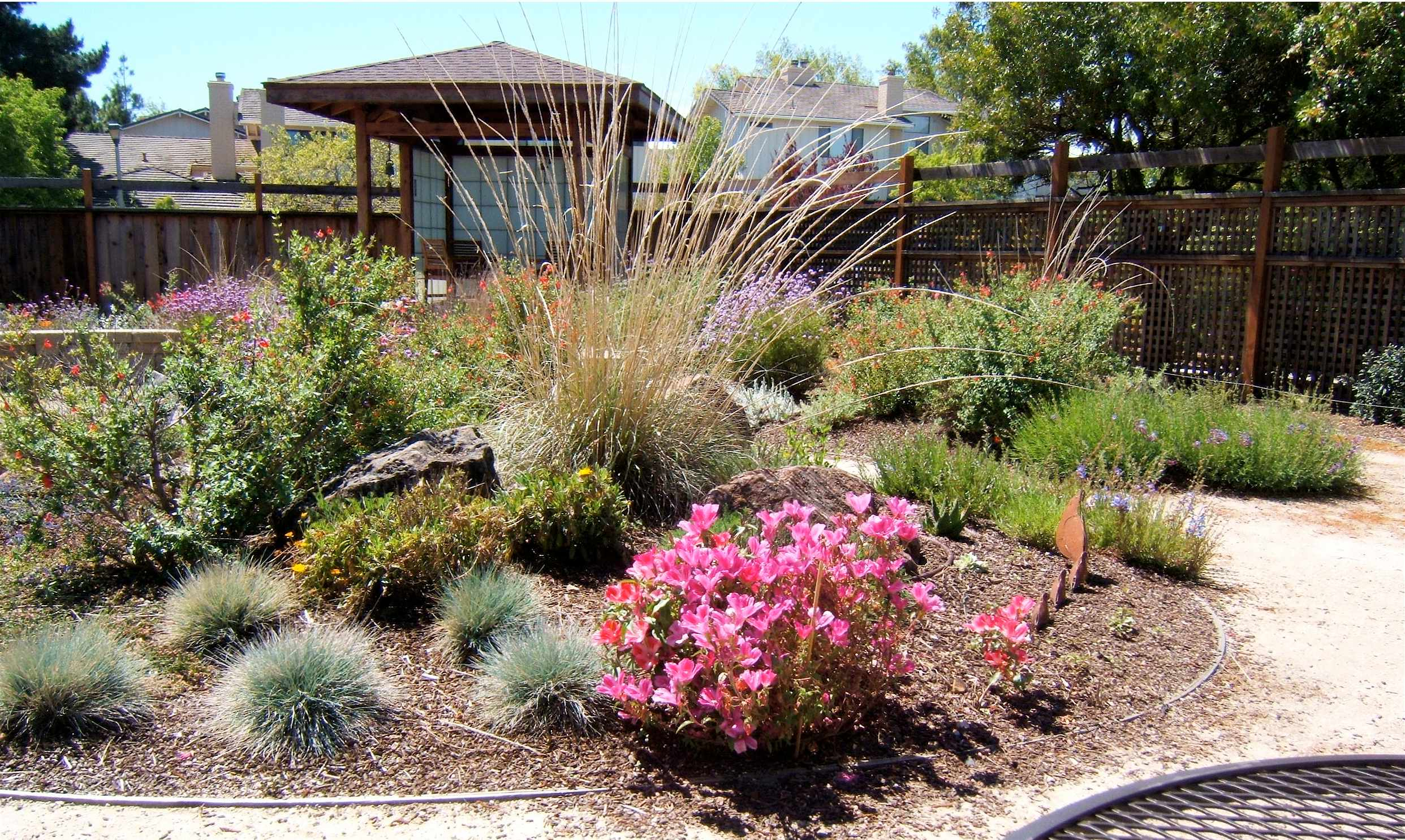 California Landscaping Plants Pictures 21